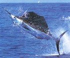 Muismat 'Swordfish'